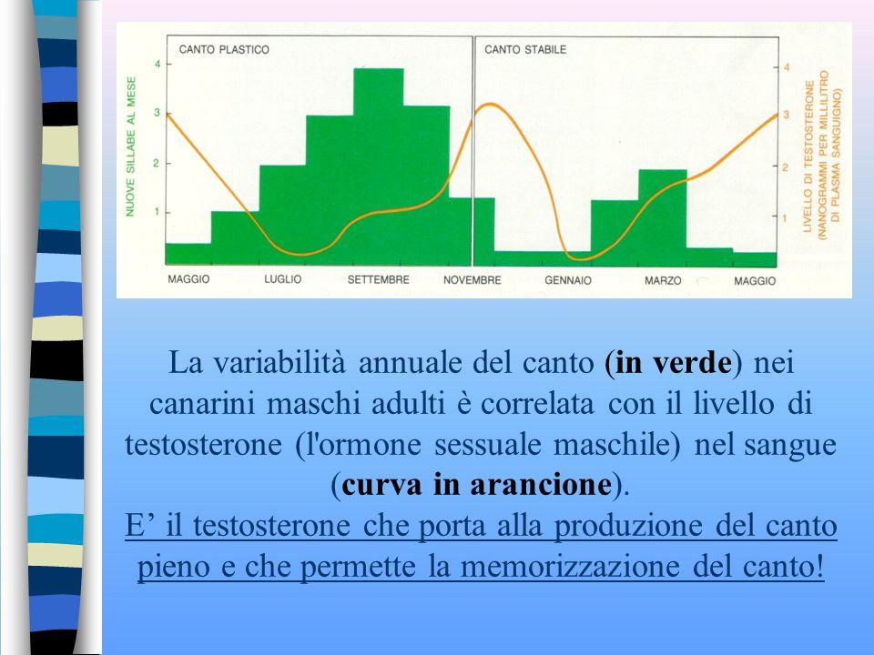 La variabilità annuale del canto (in verde) nei canarini maschi adulti è correlata con il livello di testosterone (l ormone sessuale maschile) nel sangue (curva in arancione).