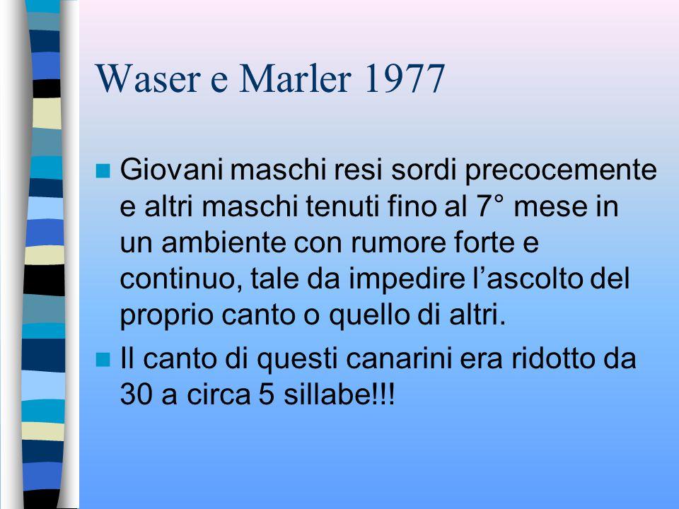 Waser e Marler 1977