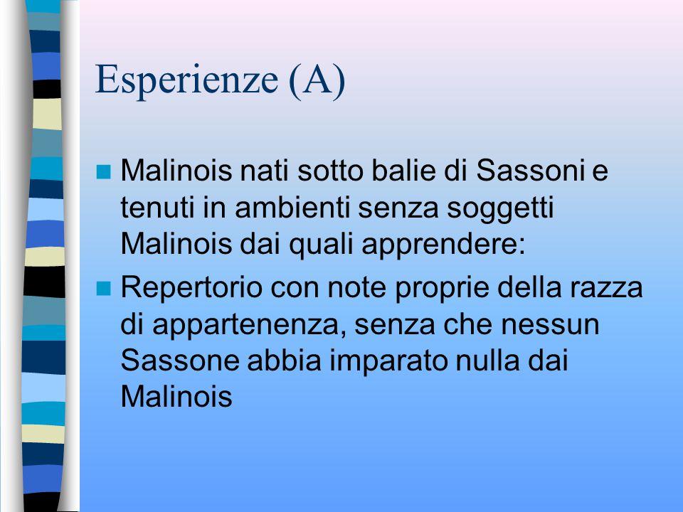 Esperienze (A) Malinois nati sotto balie di Sassoni e tenuti in ambienti senza soggetti Malinois dai quali apprendere: