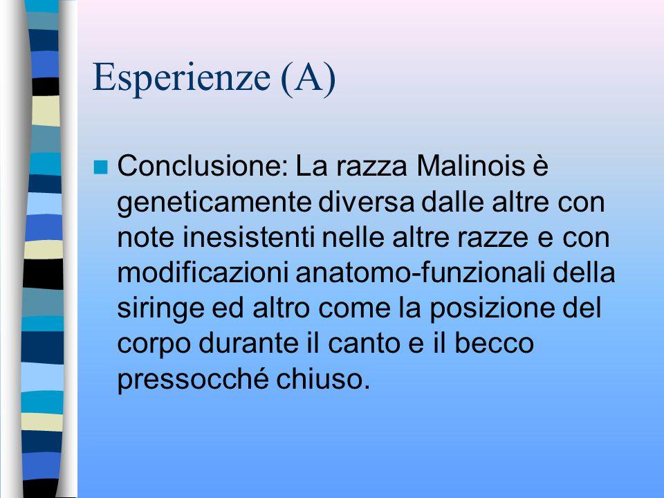 Esperienze (A)