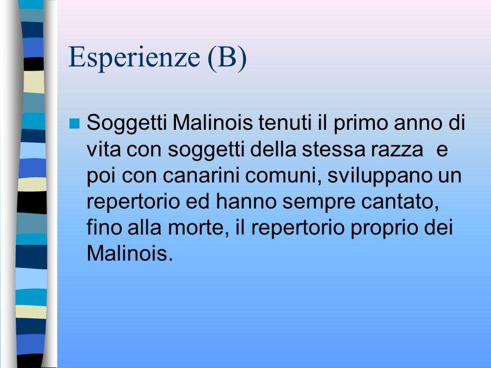 Esperienze (B)