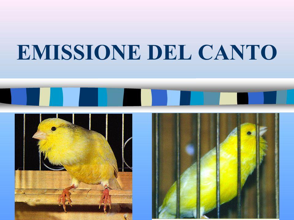 EMISSIONE DEL CANTO