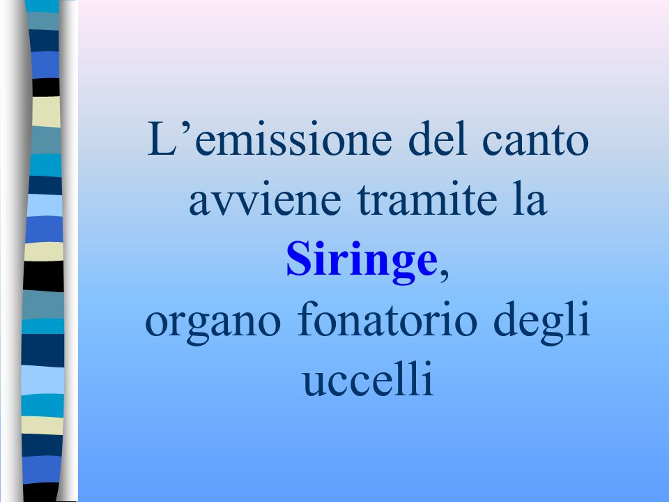 L'emissione del canto avviene tramite la Siringe, organo fonatorio degli uccelli