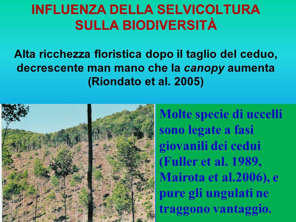 INFLUENZA della SELVICOLTURA SULLA BIODIVERSITà Alta ricchezza floristica dopo il taglio del ceduo, decrescente man mano che la canopy aumenta (Riondato et al. 2005)