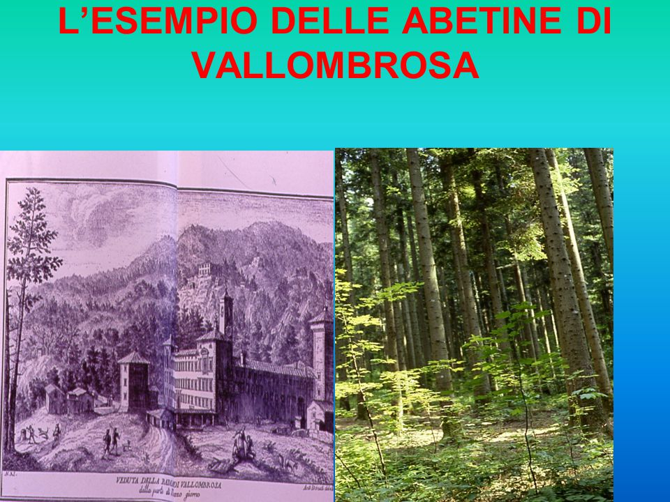 L'ESEMPIO DELLE ABETINE DI VALLOMBROSA
