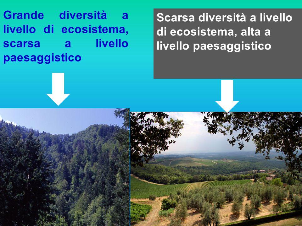 Grande diversità a livello di ecosistema, scarsa a livello paesaggistico