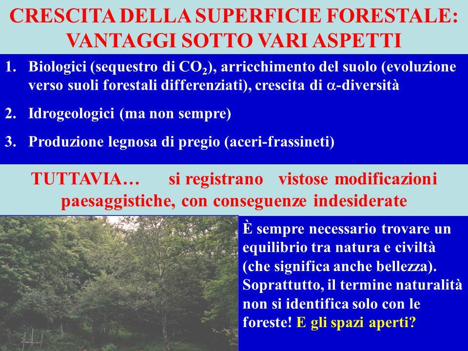 Crescita della superficie forestale: vantaggi sotto vari aspetti
