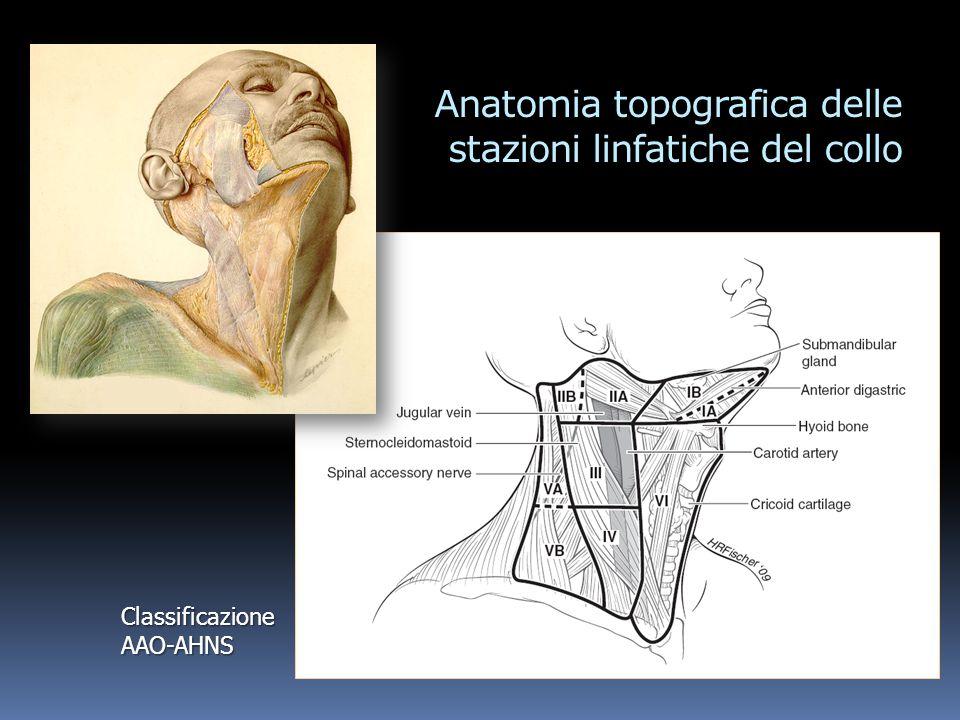 Anatomia topografica delle stazioni linfatiche del collo