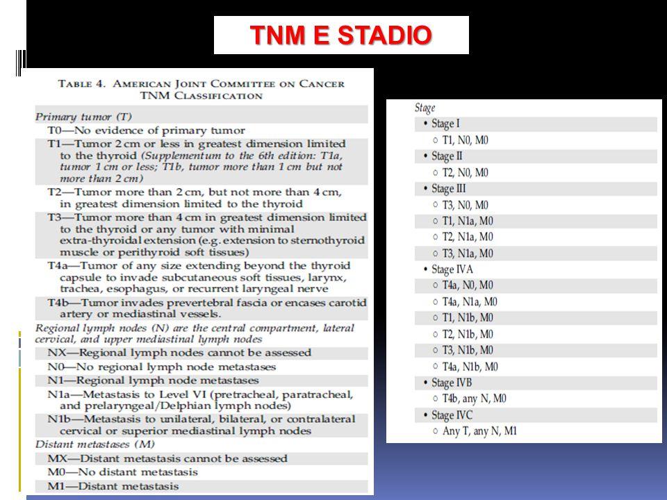 TNM E STADIO
