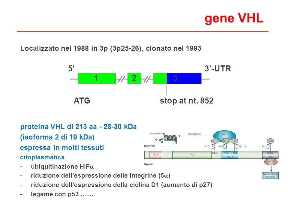 gene VHL 5' 3'-UTR 1 3 2 ATG stop at nt. 852