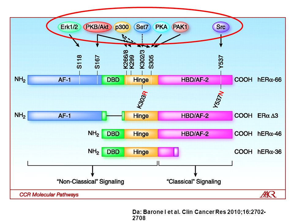 Da: Barone I et al. Clin Cancer Res 2010;16:2702-2708