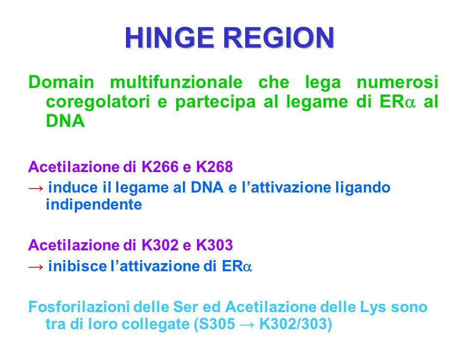 HINGE REGION Domain multifunzionale che lega numerosi coregolatori e partecipa al legame di ERa al DNA.