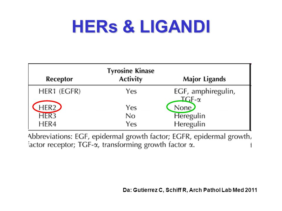 HERs & LIGANDI Da: Gutierrez C, Schiff R, Arch Pathol Lab Med 2011