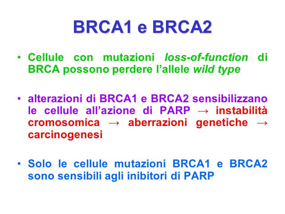 BRCA1 e BRCA2 Cellule con mutazioni loss-of-function di BRCA possono perdere l'allele wild type.