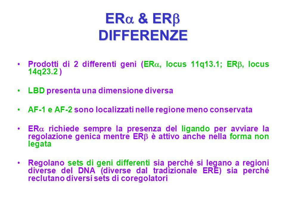 ERa & ERb DIFFERENZE Prodotti di 2 differenti geni (ERa, locus 11q13.1; ERb, locus 14q23.2 ) LBD presenta una dimensione diversa.