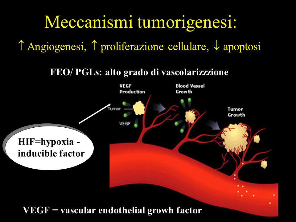 Meccanismi tumorigenesi: