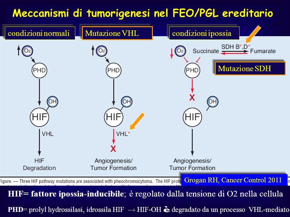 Meccanismi di tumorigenesi nel FEO/PGL ereditario