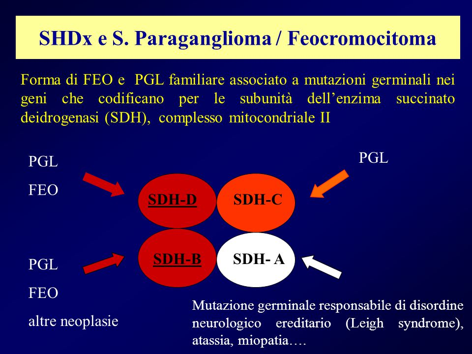 SHDx e S. Paraganglioma / Feocromocitoma