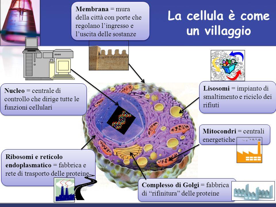 La cellula è come un villaggio