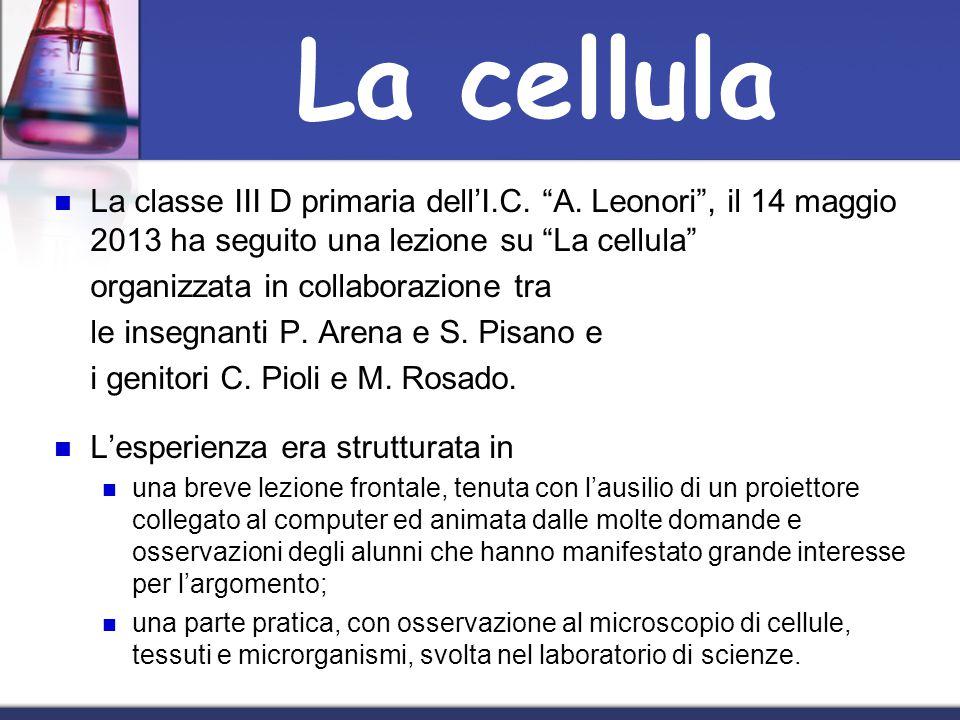 La cellula La classe III D primaria dell'I.C. A. Leonori , il 14 maggio 2013 ha seguito una lezione su La cellula