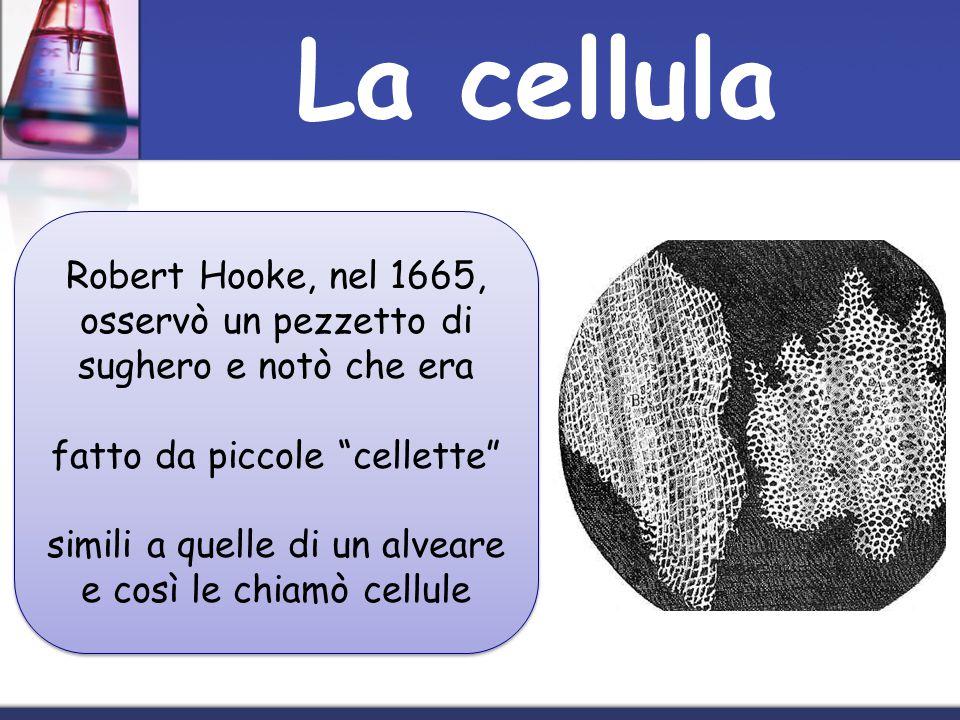 La cellula Robert Hooke, nel 1665, osservò un pezzetto di sughero e notò che era. fatto da piccole cellette