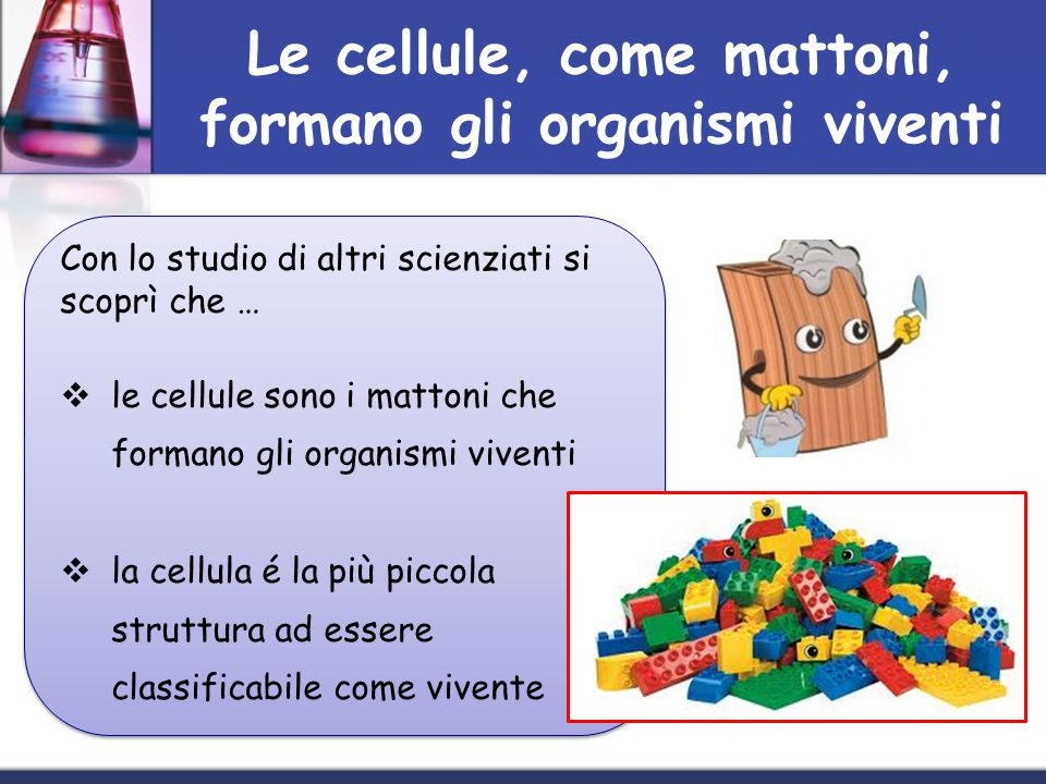 Le cellule, come mattoni, formano gli organismi viventi