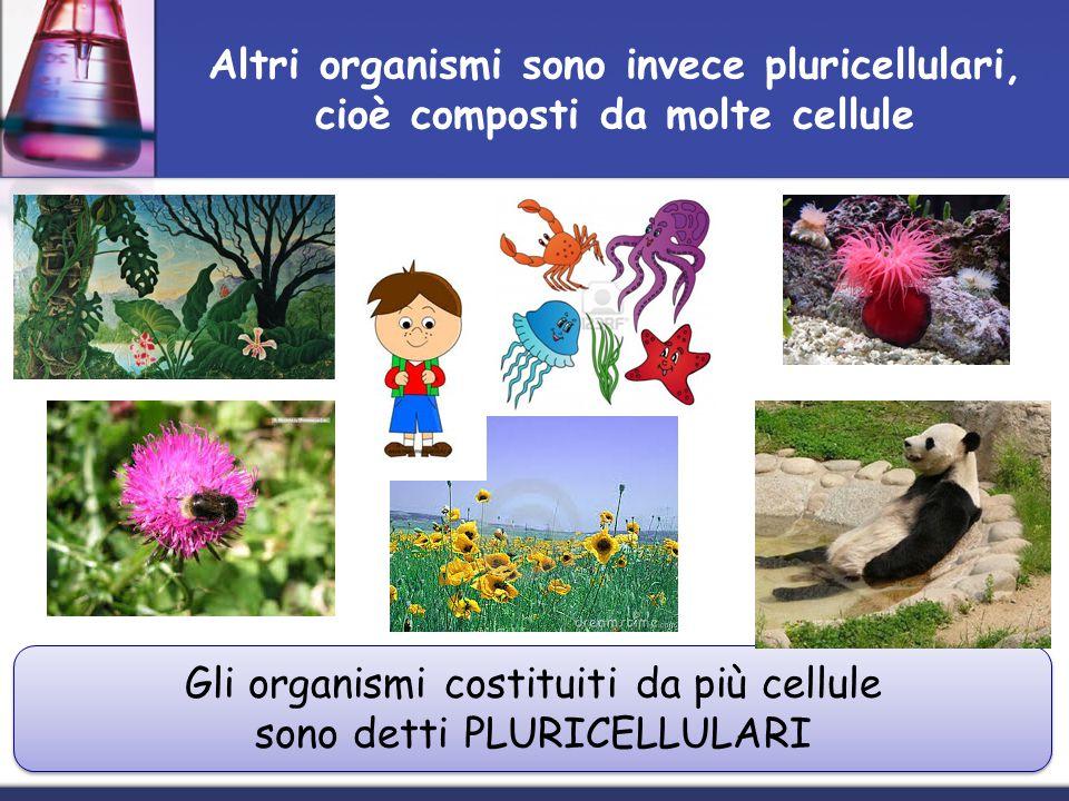 Gli organismi costituiti da più cellule sono detti PLURICELLULARI