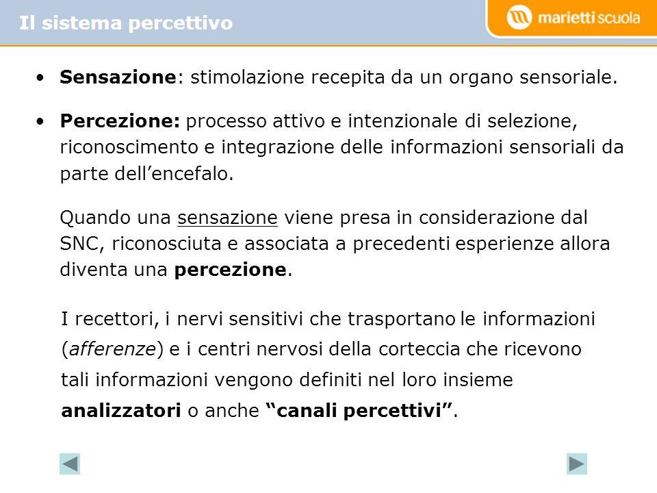 Il sistema percettivo Sensazione: stimolazione recepita da un organo sensoriale.