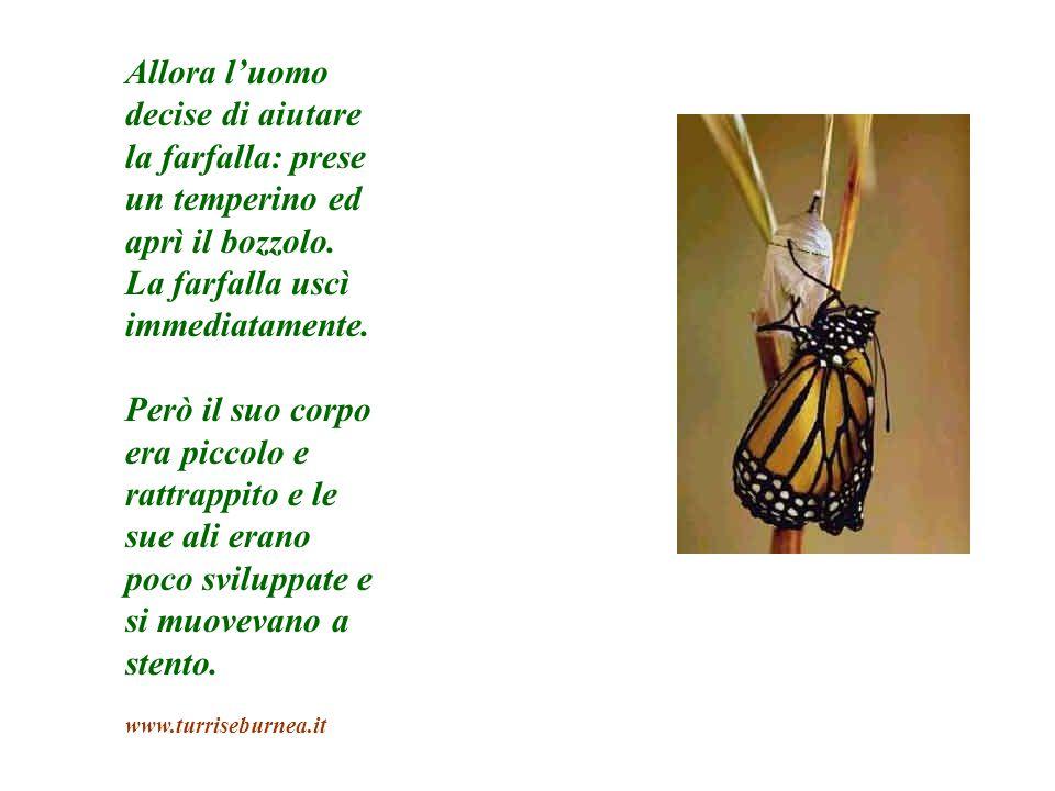 Allora l'uomo decise di aiutare la farfalla: prese un temperino ed aprì il bozzolo. La farfalla uscì immediatamente.