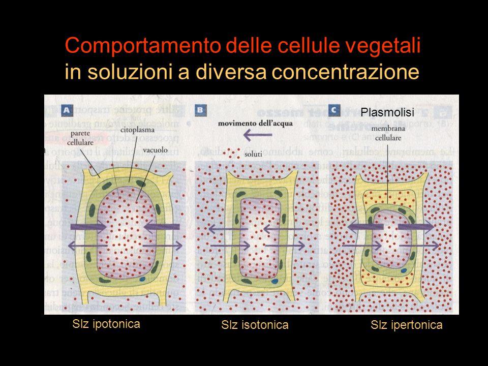 Comportamento delle cellule vegetali
