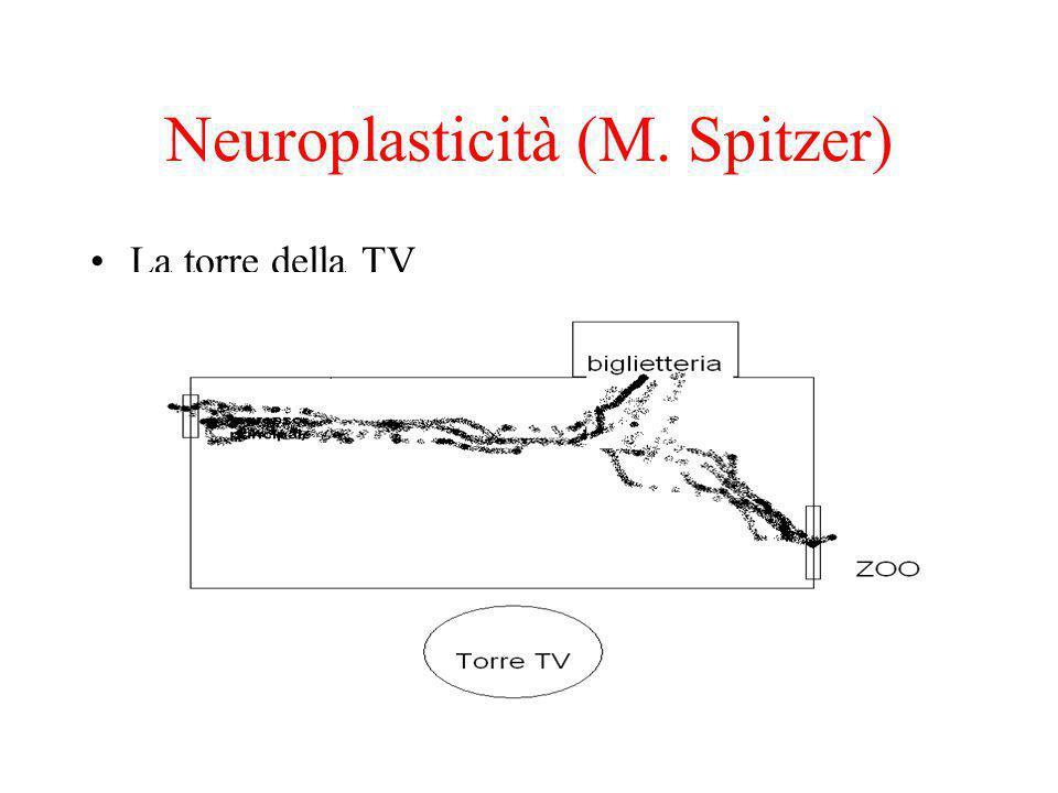 Neuroplasticità (M. Spitzer)