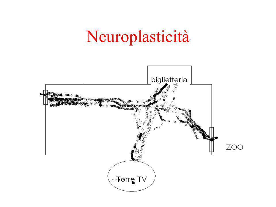 Neuroplasticità ….