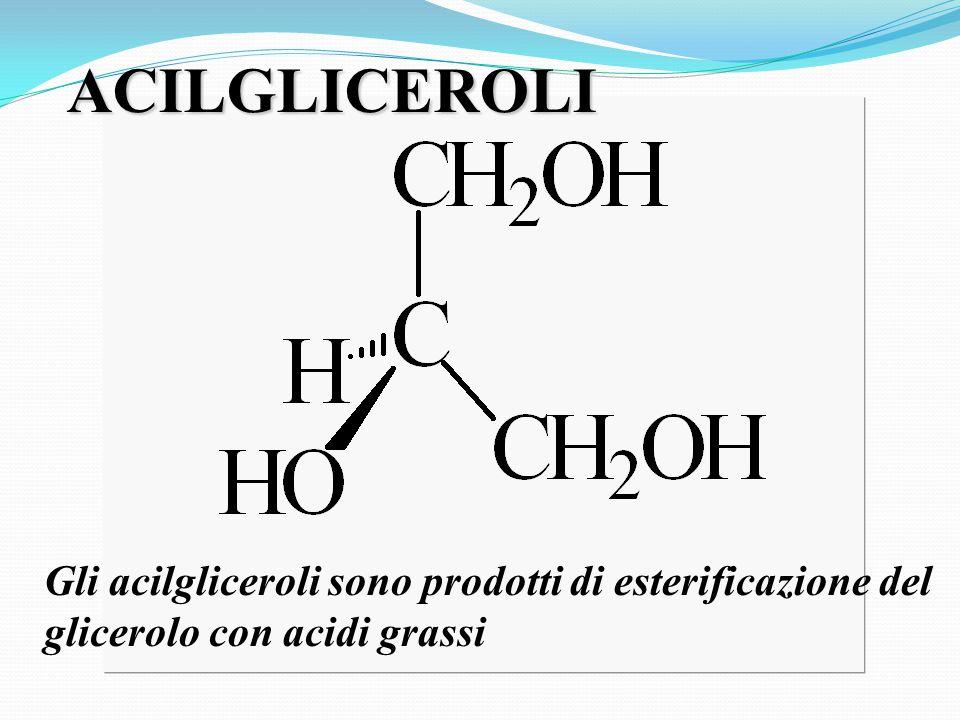 ACILGLICEROLI Gli acilgliceroli sono prodotti di esterificazione del