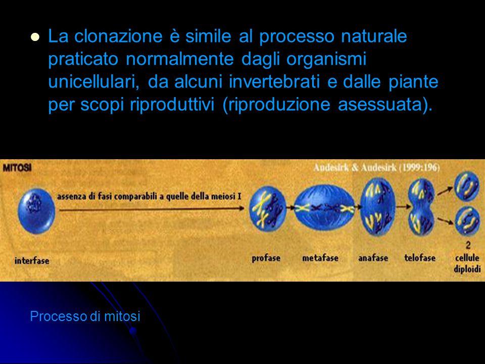 La clonazione è simile al processo naturale praticato normalmente dagli organismi unicellulari, da alcuni invertebrati e dalle piante per scopi riproduttivi (riproduzione asessuata).