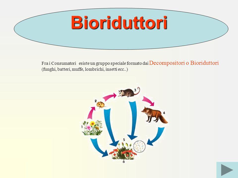 Bioriduttori