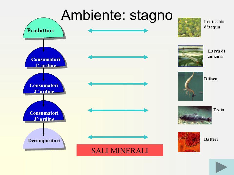 Ambiente: stagno SALI MINERALI Produttori Consumatori 1° ordine