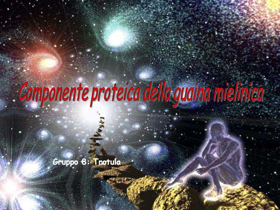 Componente proteica della guaina mielinica