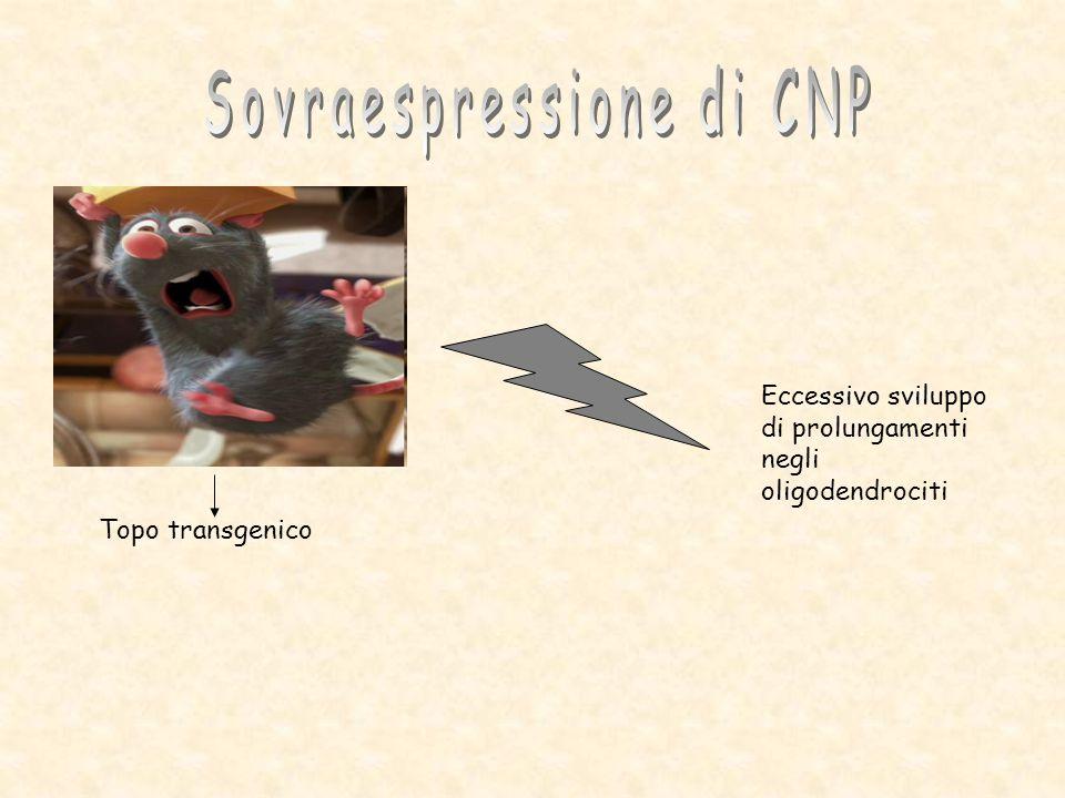 Sovraespressione di CNP