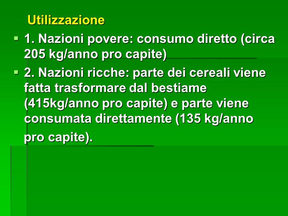 Utilizzazione 1. Nazioni povere: consumo diretto (circa 205 kg/anno pro capite)