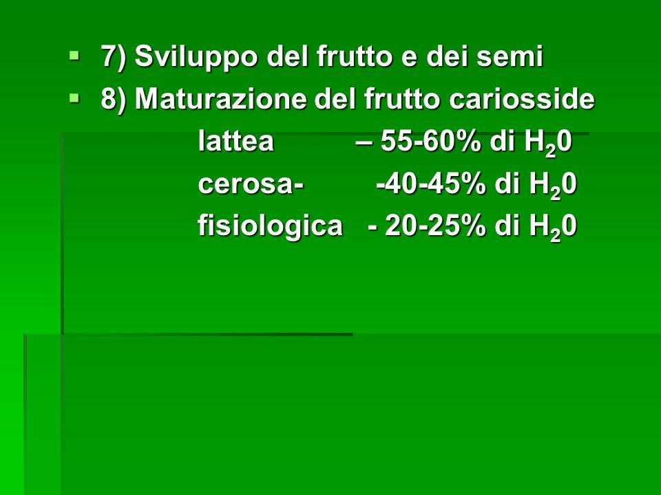 7) Sviluppo del frutto e dei semi
