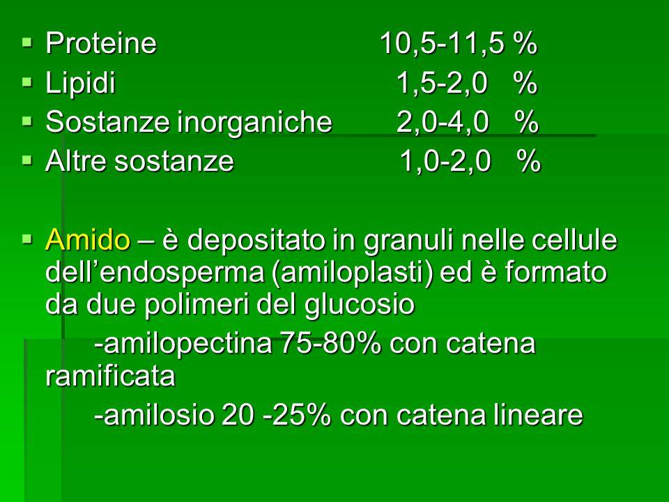 Proteine 10,5-11,5 % Lipidi 1,5-2,0 % Sostanze inorganiche 2,0-4,0 %