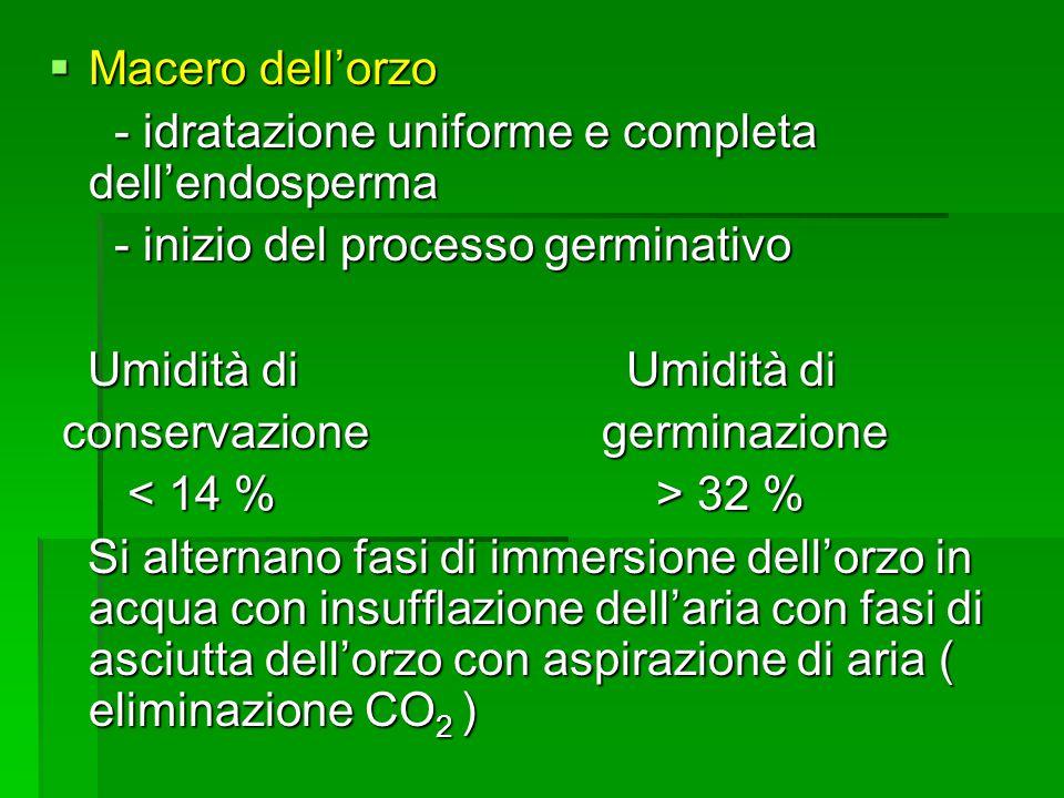 Macero dell'orzo - idratazione uniforme e completa dell'endosperma. - inizio del processo germinativo.