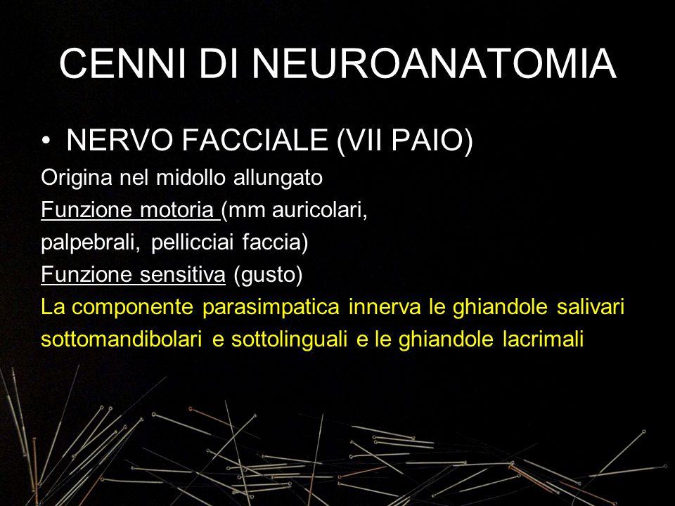 CENNI DI NEUROANATOMIA