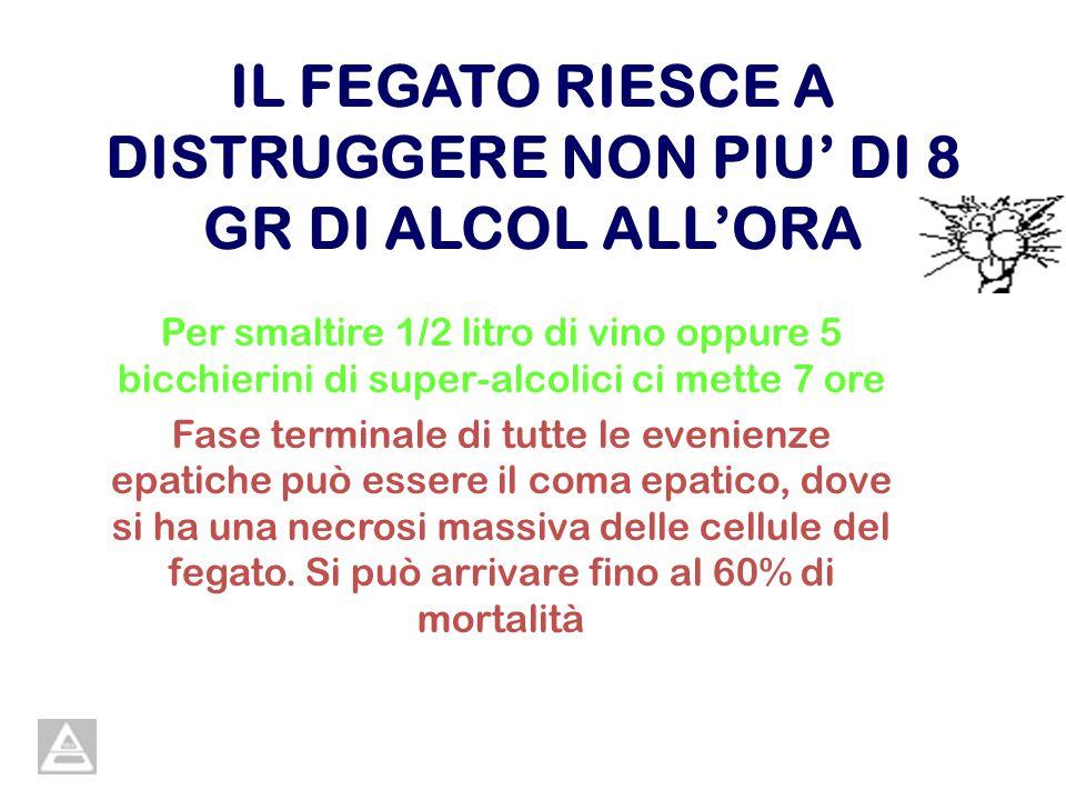 IL FEGATO RIESCE A DISTRUGGERE NON PIU' DI 8 GR DI ALCOL ALL'ORA