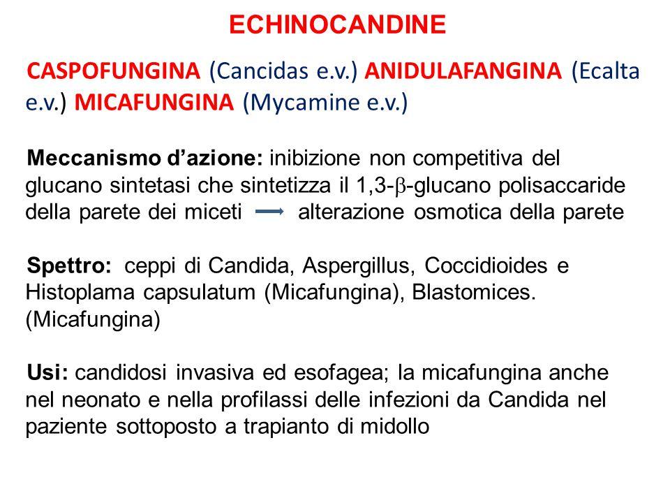 ECHINOCANDINE CASPOFUNGINA (Cancidas e.v.) ANIDULAFANGINA (Ecalta e.v.) MICAFUNGINA (Mycamine e.v.)