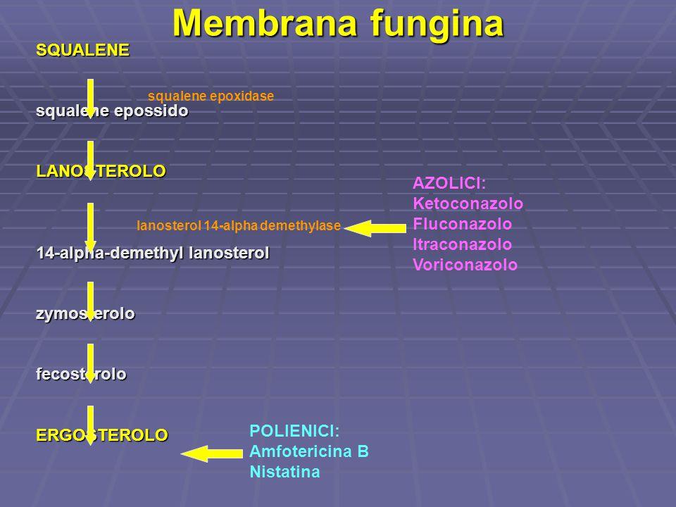 Membrana fungina SQUALENE squalene epossido LANOSTEROLO