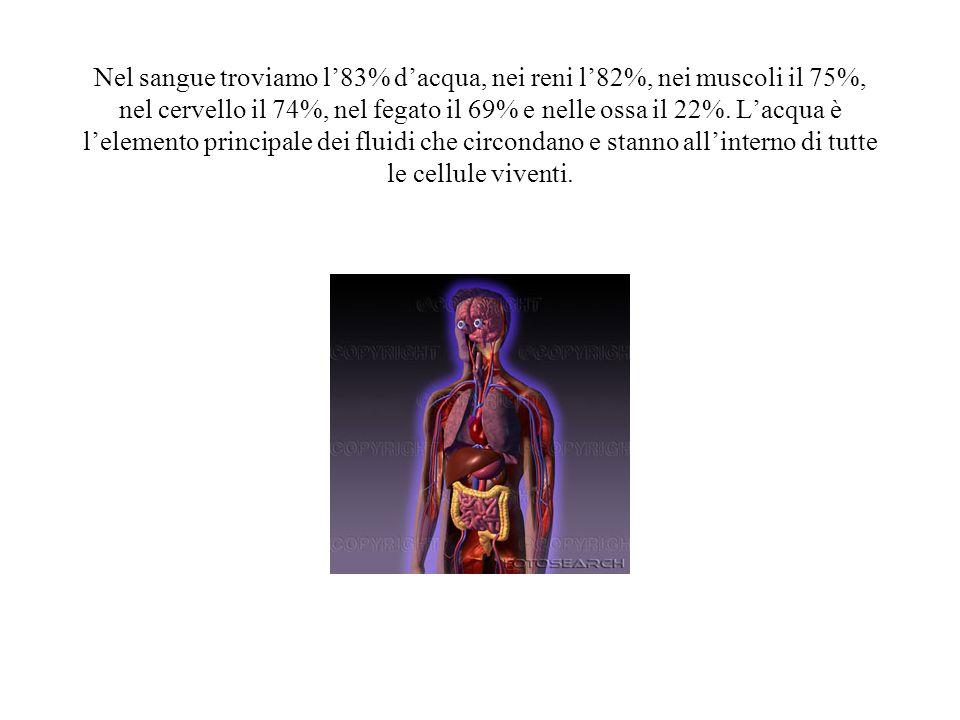 Nel sangue troviamo l'83% d'acqua, nei reni l'82%, nei muscoli il 75%, nel cervello il 74%, nel fegato il 69% e nelle ossa il 22%.