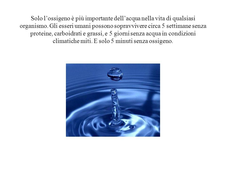 Solo l'ossigeno è più importante dell'acqua nella vita di qualsiasi organismo.