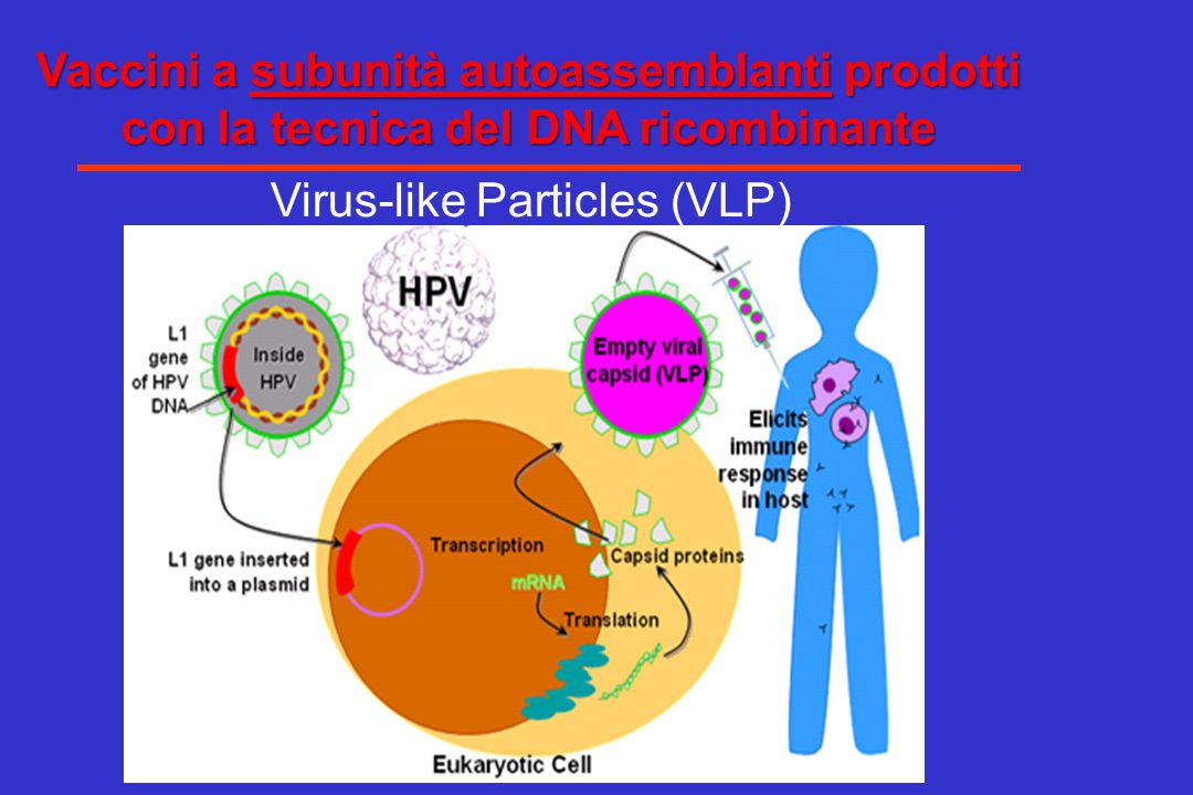 Virus-like Particles (VLP)