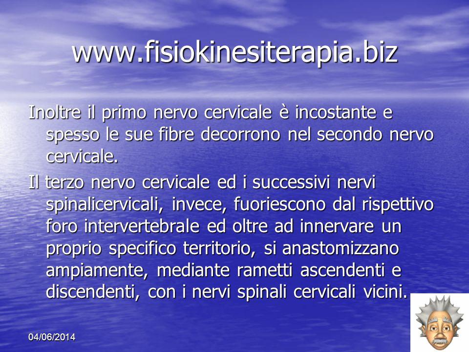 www.fisiokinesiterapia.biz Inoltre il primo nervo cervicale è incostante e spesso le sue fibre decorrono nel secondo nervo cervicale.